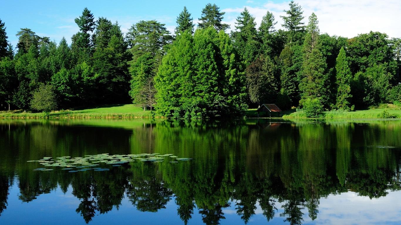 清澈湖水与绿色树林护眼高清壁纸